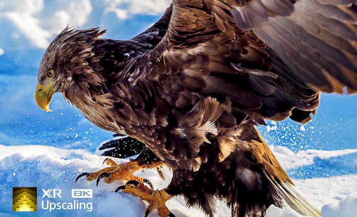 Крупный план орла, показывающий четкость разрешения 8K