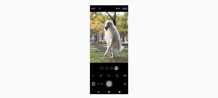 Интерфейс камеры с белой собакой на экране