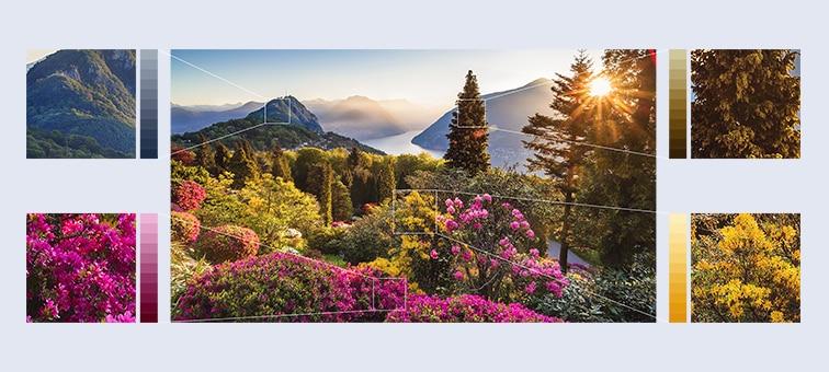 Изображения горных цветов с невероятной детализацией благодаря технологии Object-based HDR Remaster