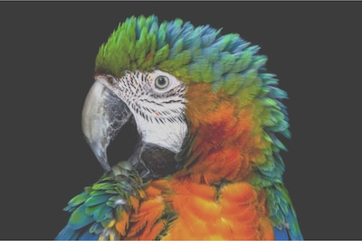 Попугай на ЖКД с боковой подсветкой Edge LED, детальный вид