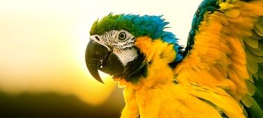 Детализированное изображение попугая в 4K