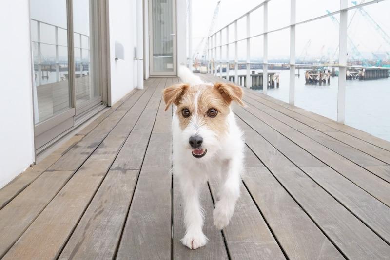 Маленькая собака на лодке
