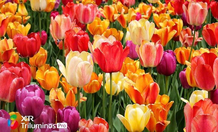 Изображение цветов крупным планом, демонстрирующее мягкие тона и оттенки лепестков